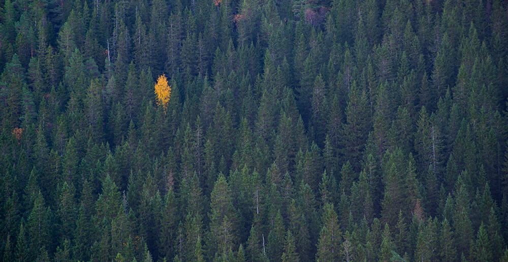 høst, skog