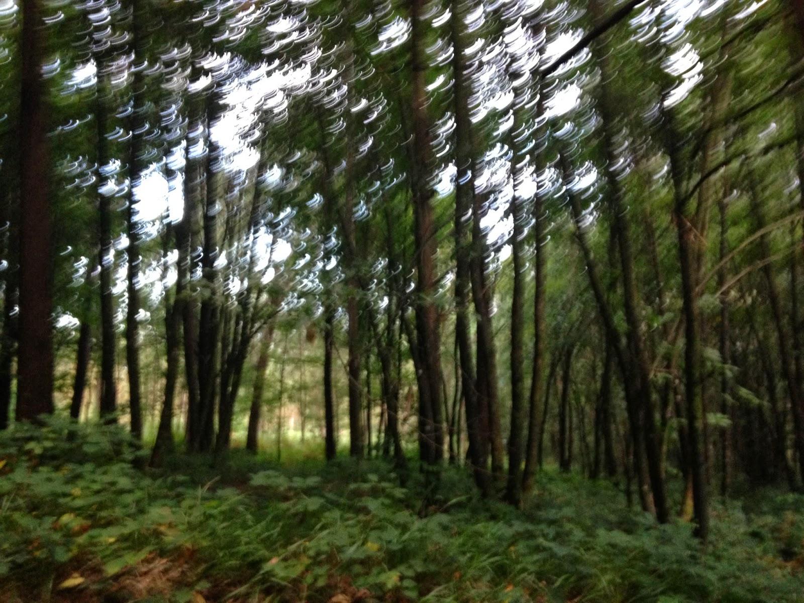 Bosque mágico, lleno de árboles