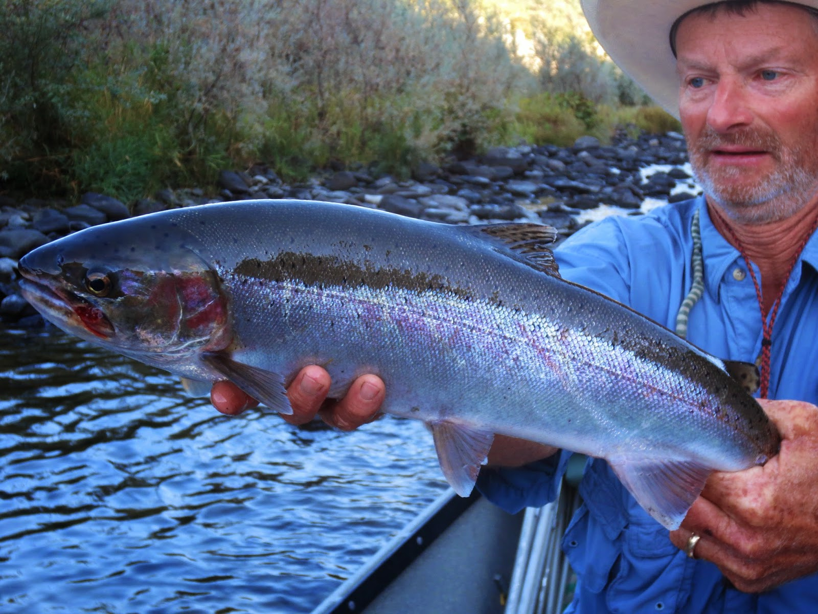 rogue river fly fishing guides