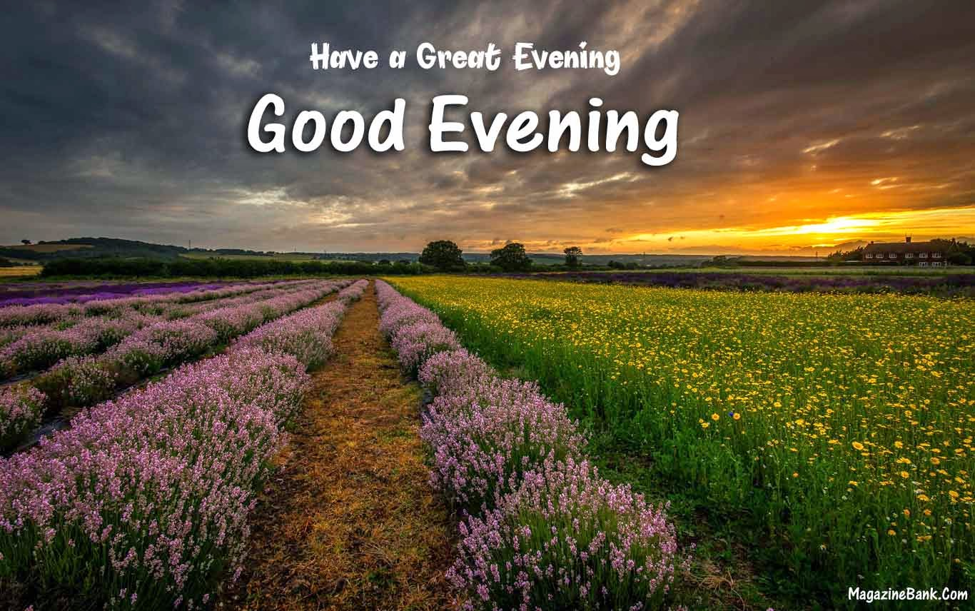 Good Evening Text Messages Latest Quotes