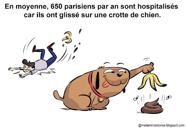 en moyenne, 650 parisiens sont hospitalisés par an, car ils ont glissé sur une crotte de chien