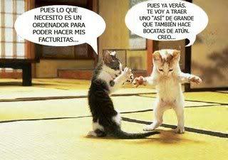 imágenes con frases graciosas en gatos