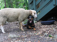 Lamb and Dog