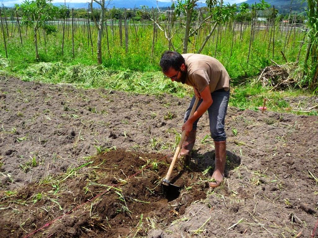 Agricultura en tu hogar c mo preparar la tierra de tu - Como limpiar los cristales para que queden perfectos ...