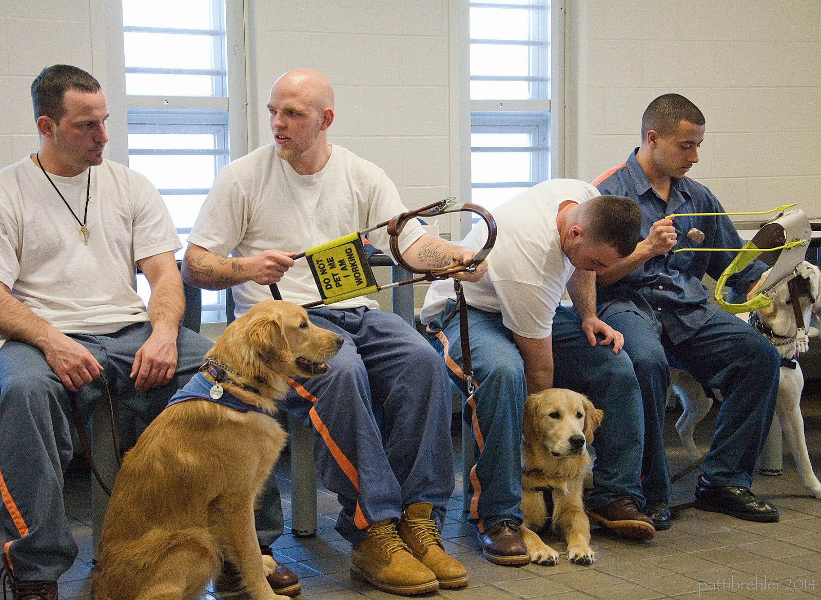 "Four men are sitting on stools in a row, with two golden retrivers and one yellow lab. Three of the men have the prison blue pants and white t-shirts, the man on the far right has a blue shirt. The first golden is sitting facing the right in front of the first two men. The second golden is lying down between the legs of the thrid man, who is reaching down to the dog. The yellow lab is standing past the last man. The second and fourth men are holding guide dog harnesses. The second man's harness is brown leather with a yellow ""do not pet me I'm working"" sign on the handle. The fourth man's harness is white with a yellow harness."