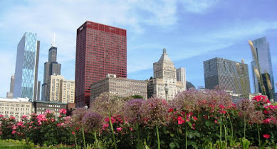 Foreground flowers, background skyscrapers