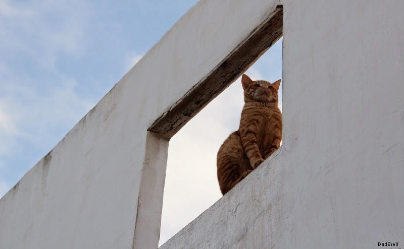 Chat dans les Oudayas