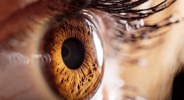 Si, Majdanozi ndihmon në përmirësimin e Shikimit
