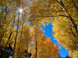 autumn colors inyo national (10)