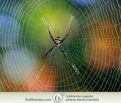 http://spider-backlink.blogspot.com/