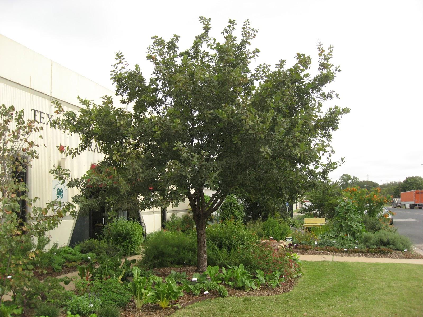 Green House Good Life Inside Austin Edible Garden Tour