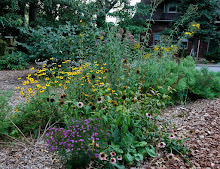 Planting a native pocket meadow