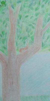 rysunek, wiewiórka, drzewo, zwierzę, ssak