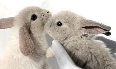get a rabbit