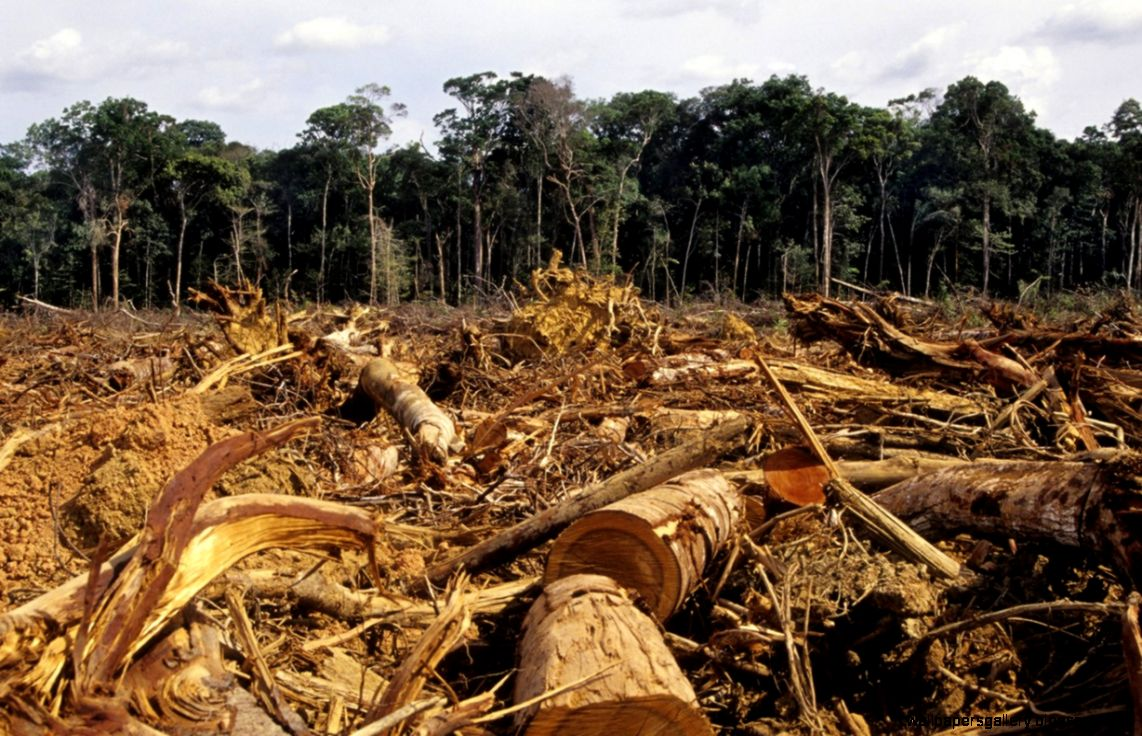 Deforestation in the rainforest by Ryan and Jay   ThingLink