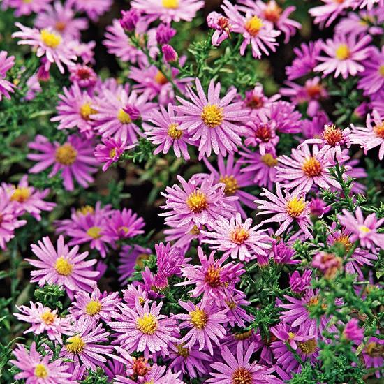 flores para jardim de outono:Um jardim para cuidar: Plantações de outono, dê cor ao seu jardim !