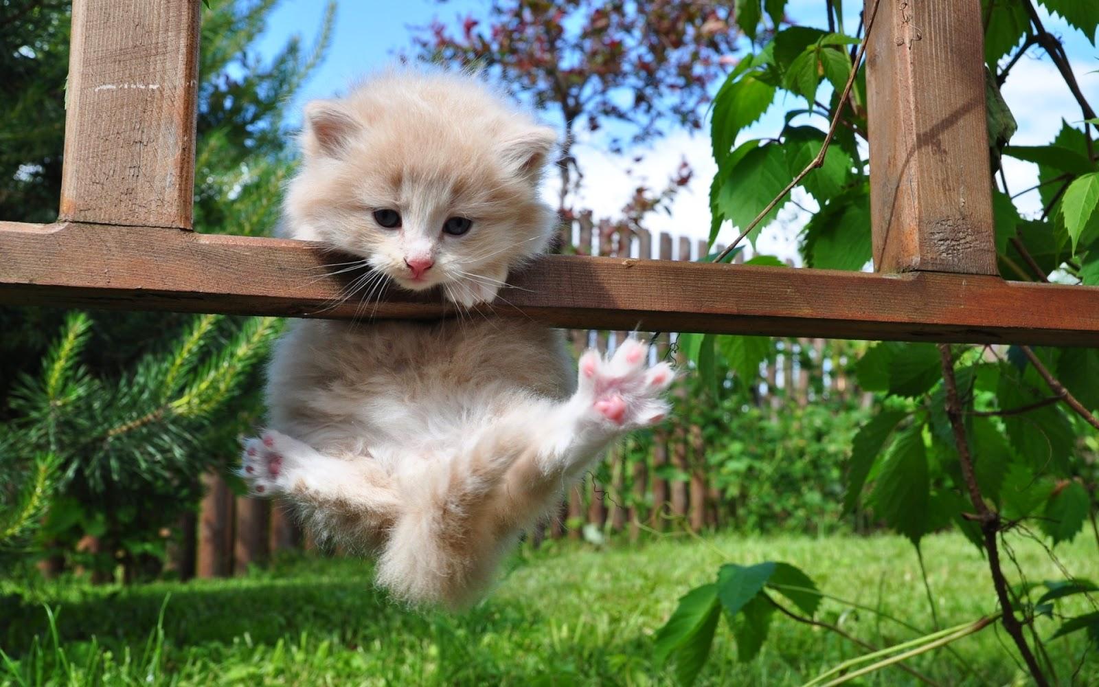 Kitten on Pergola
