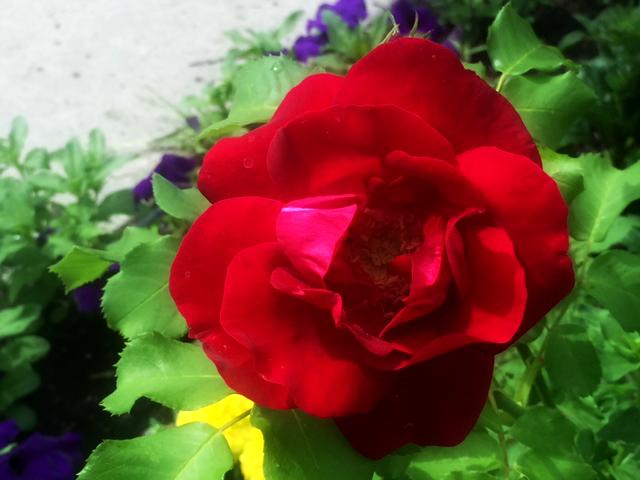 Flowers @ UAlberta