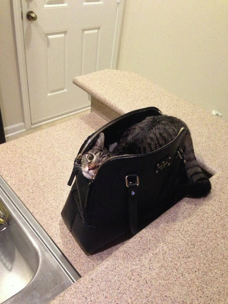 Funny cats - part 92 (40 pics + 10 gifs), cat sits in a bag