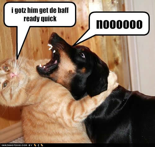 Funny Animals Zone: Funny Cats And Dogs Pictures and ... Funny Pictures Of Dogs