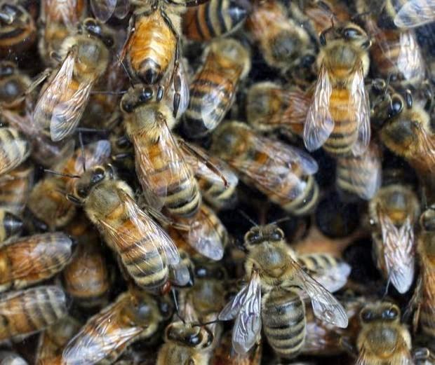 Burts Bees Glass Hive
