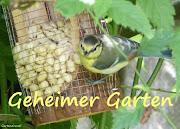 Mein GartenBlog ruht...