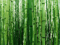 Bamboo Nature1