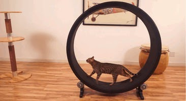 Hamster wheels for playful cat