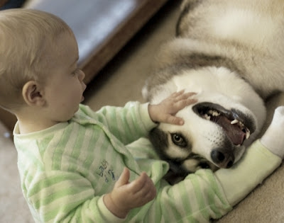 Pictures of cute baby boy with Pet