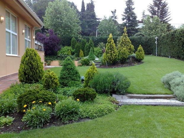 Arte y jardiner a poda de con feras for Pinos para jardin