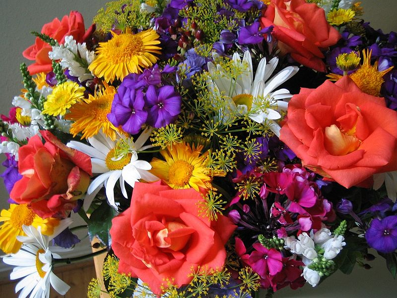 flowers for flower lovers.: Beautiful flowers wallpapers.