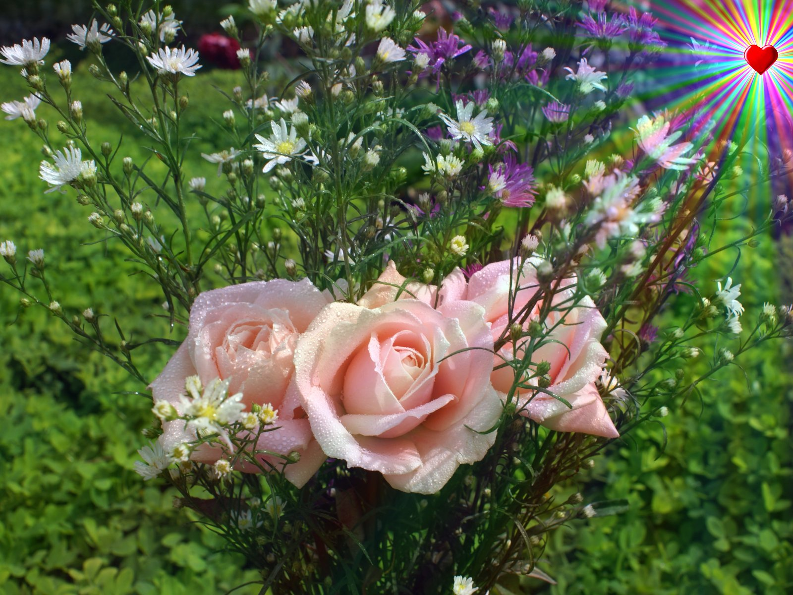 http://3.bp.blogspot.com/-nXc5RUOAjvo/TmiWmdynubI/AAAAAAAAILM/hLV80PgkVzQ/s1600/love_roses-dsc00344-a1.jpg