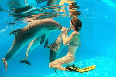 Delfines - Dolphins