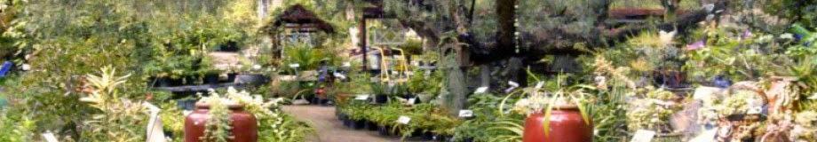 Buena Creek Gardens