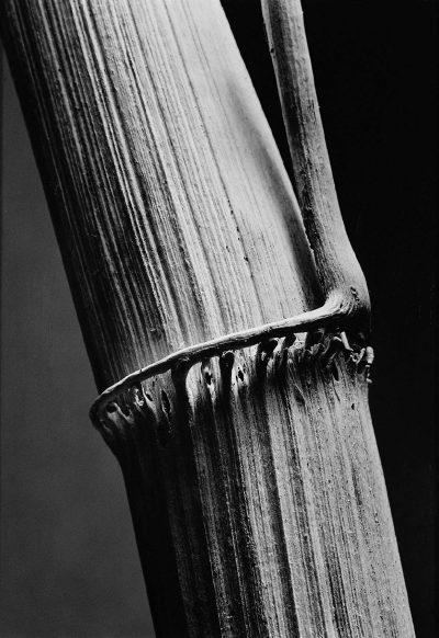 Photograph Andreas Feininger/