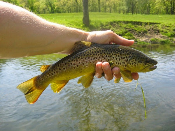 Minnesota driftless fly fishing trip report early for Driftless fly fishing