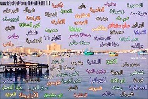أحياء الإسكندرية