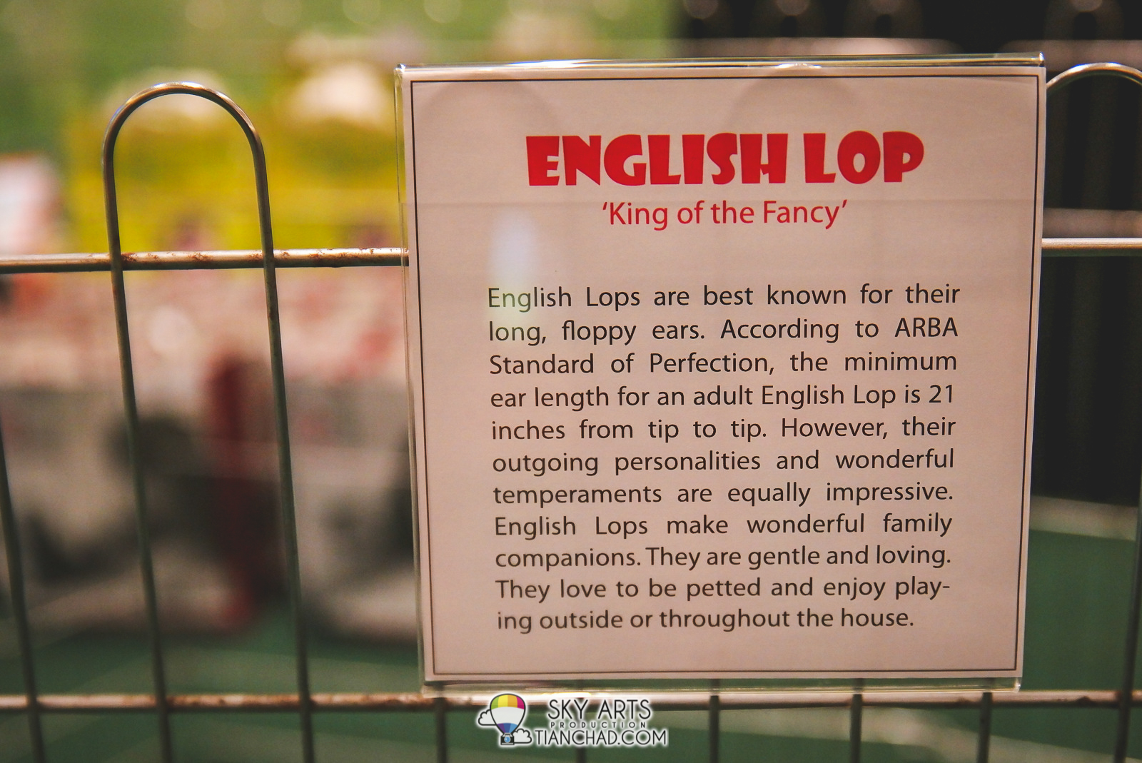 Description for English Lop