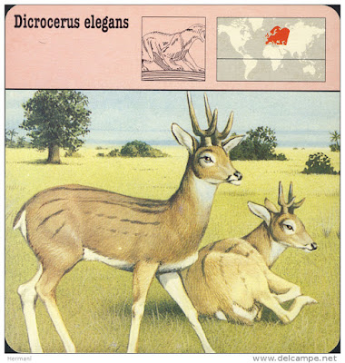 extinct cervidae Dicrocerus