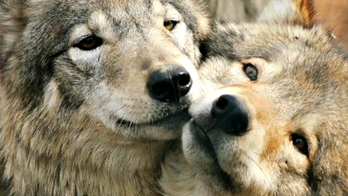 10 Animals Who Mate For Life (Photos)