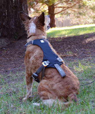 crash-tested dog harness