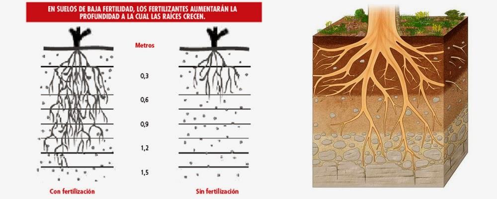Cu l es el suelo m s adecuado para la vid for Importancia de los suelos