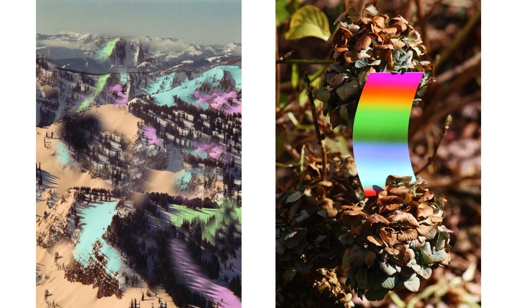 color, fiction, flowers