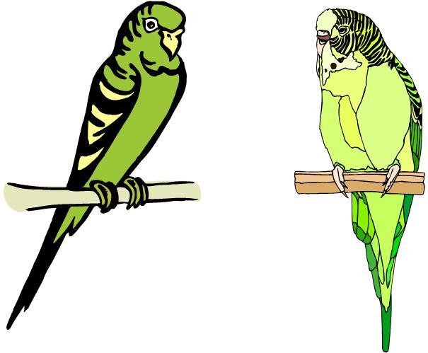 a bird / a budgie / a canary