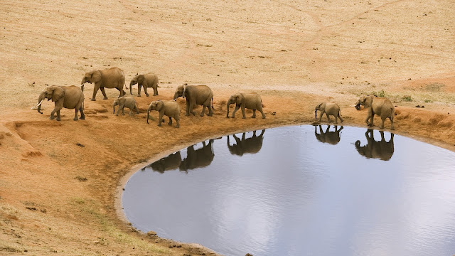 elephants,lake, water, wallpapers, nature, desktop, HD, HQ, tapandaola111