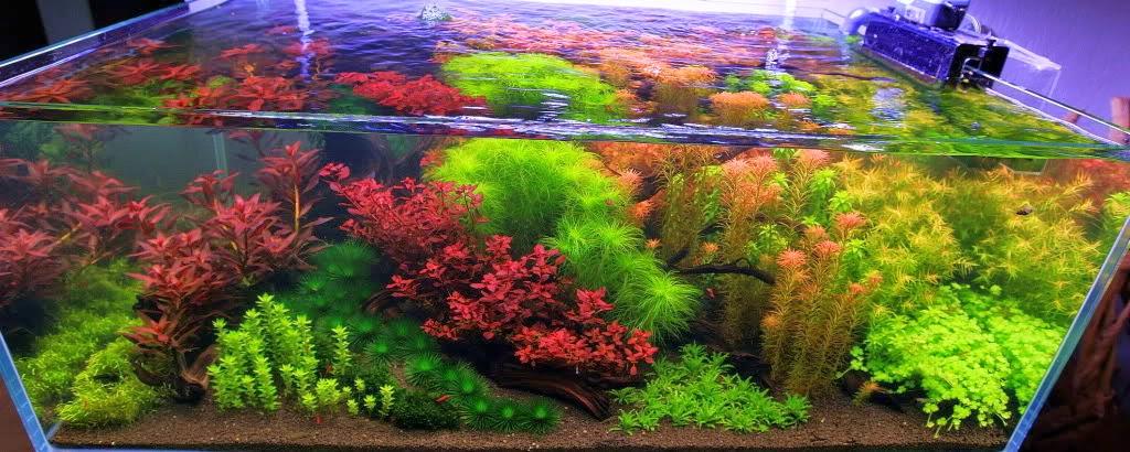 Il giardino delle naiadi aquascaping giardinaggio for Acquario da giardino