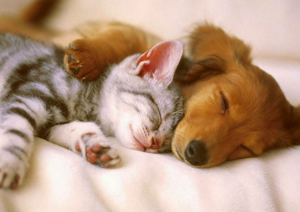 Cute Cat & Dog Sleeping with Love