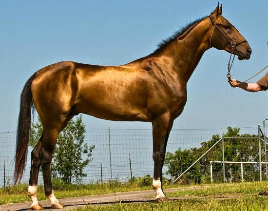 Prettiest Horse Breed In The World