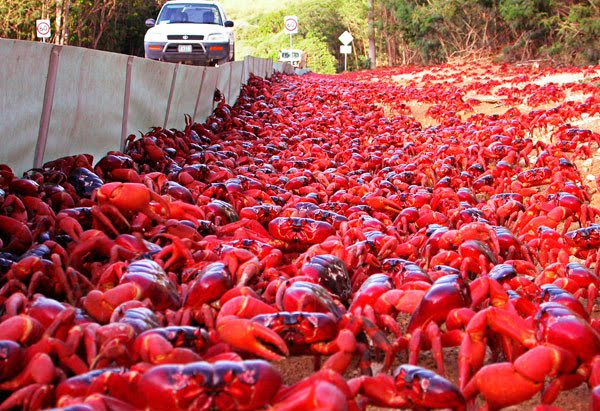 [Imagen: 201012-omag-marvels-crabs-600x4112.jpg]