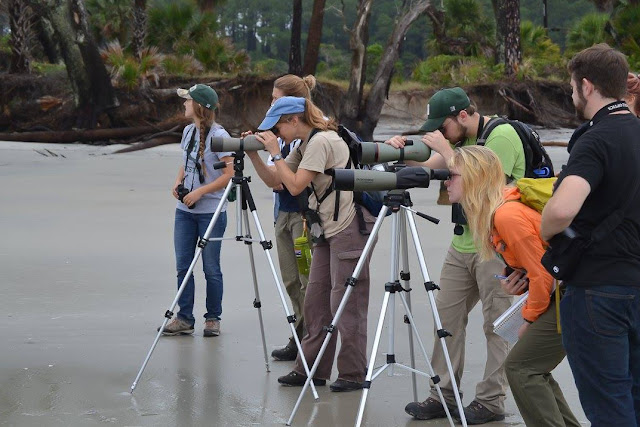 Birding in South Carolina